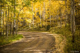 Lost Lake Road Autumn 2 print
