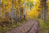 Road to Fall print