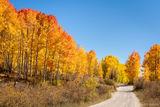 Autumn Blaze print