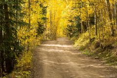 Aspen,Colorado,autumn,White River National Forest,Castle Creek Road