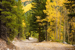 Aspen,White River National Forest,fall