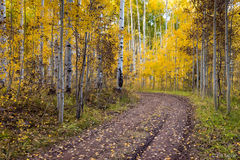 Kebler Pass Road,fall,autumn,dirt road