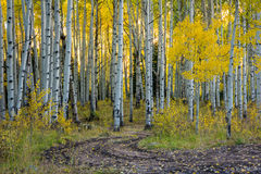 Kebler Pass Road,aspen,evening