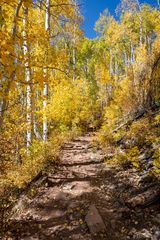 Dark Canyon Trail, aspen, fall, trail, Raggeds Wilderness