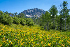 Marcellina Mountain, Gunnison National forest, Colorado, mule ears