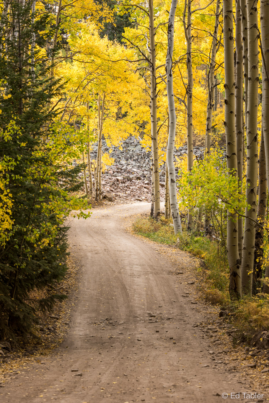 Last Dollar Road,Telluride,autumn,fall,Uncompahgre National Forest,Colorado, photo