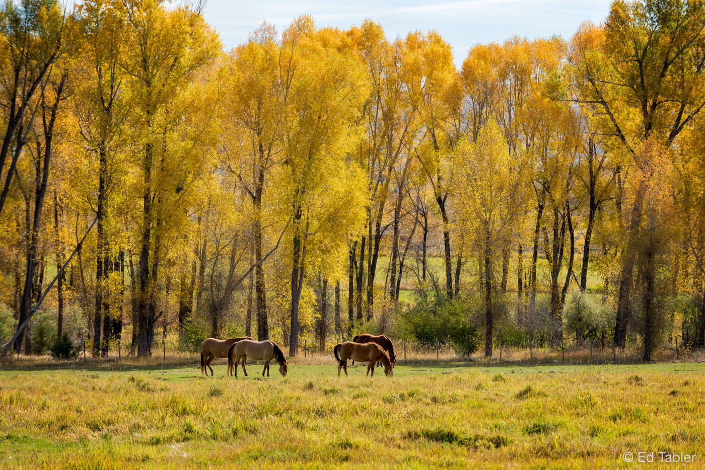 horses,autumn,Cimarron,fall,morning, photo