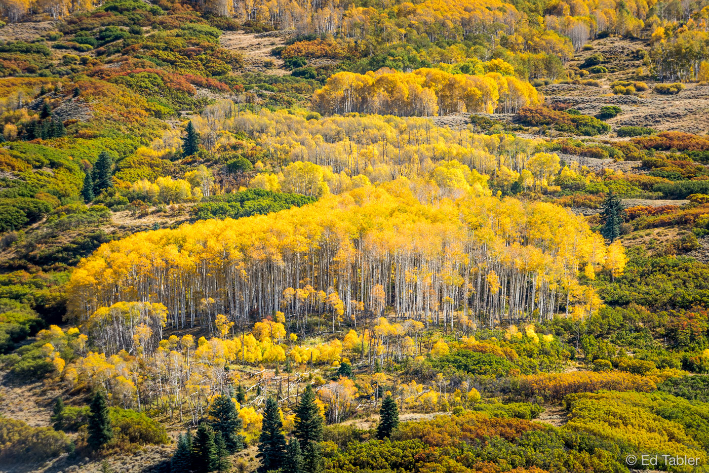 aspen, Cimarron Valley,strand, photo