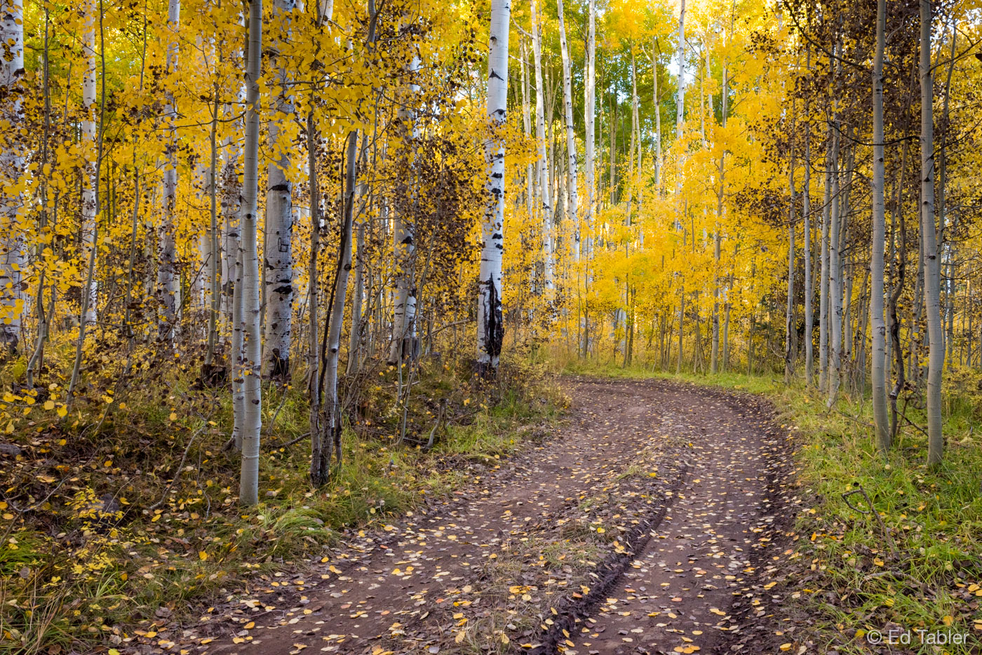 Kebler Pass Road,fall,autumn,dirt road, photo