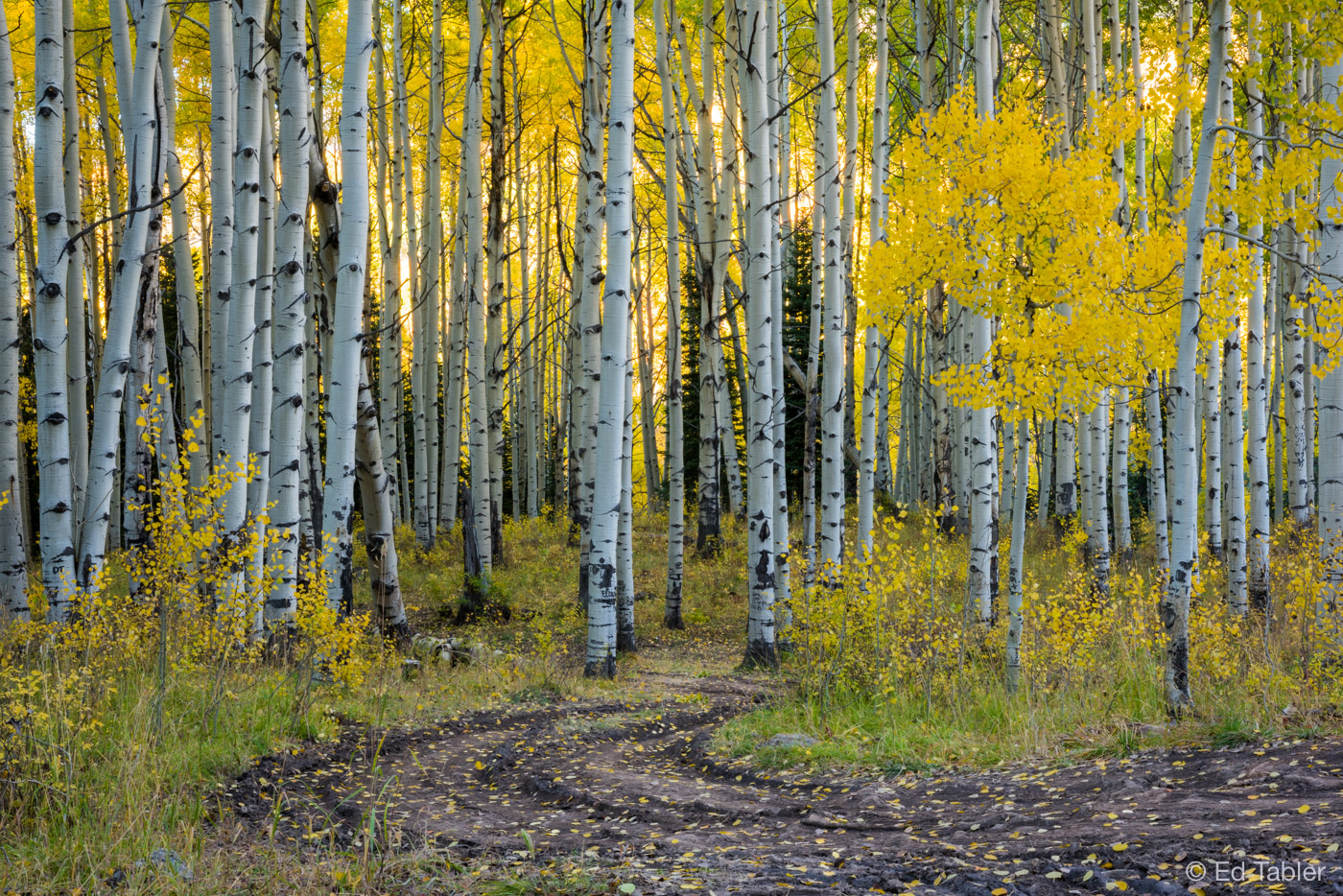 Kebler Pass Road,aspen,evening, photo