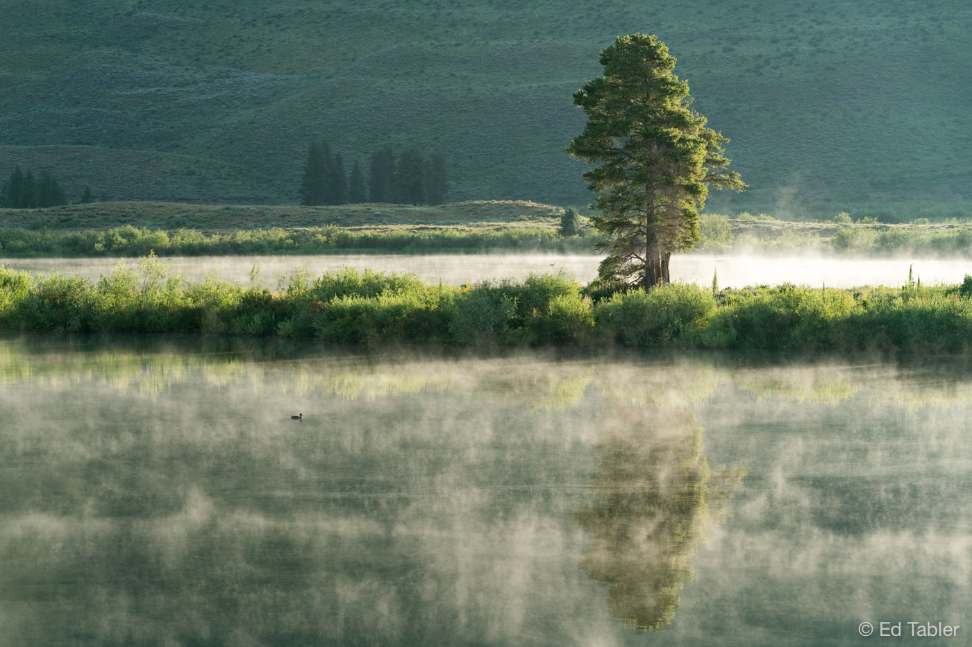 Peanut Lake,Crested Butte,steaming lake, pine tree, photo
