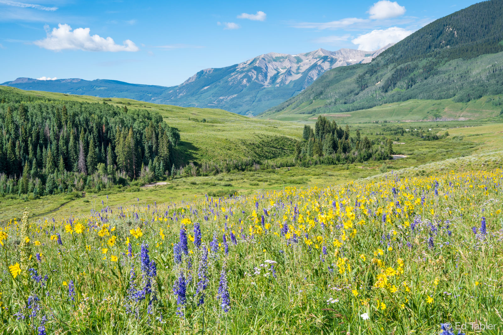 Crested Butte,Lupine,Meadow Arnica,Leafy Aster,Wjhetstone Mountain,Brush Creek, photo