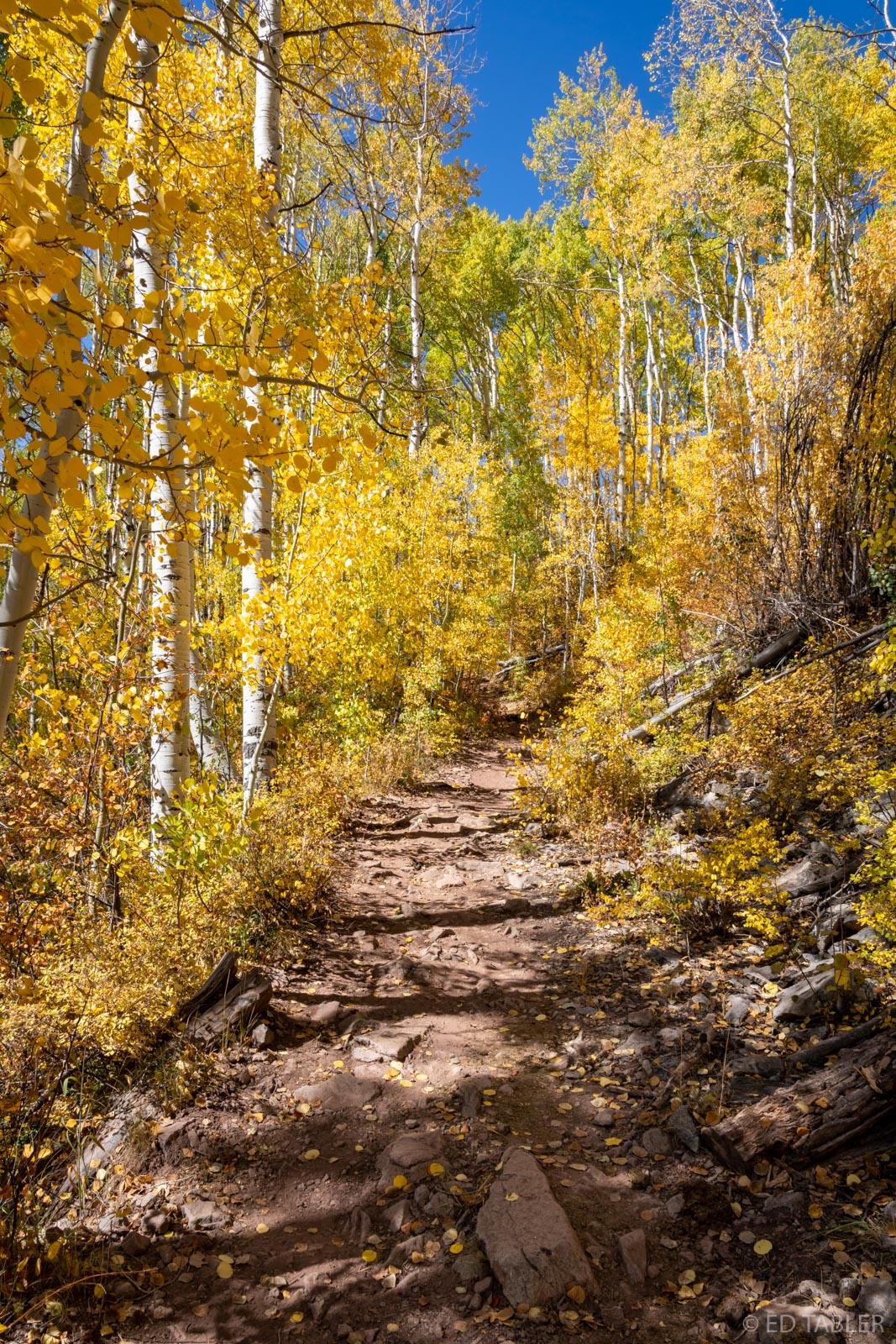 Dark Canyon Trail near Kebler Pass, Colorado.