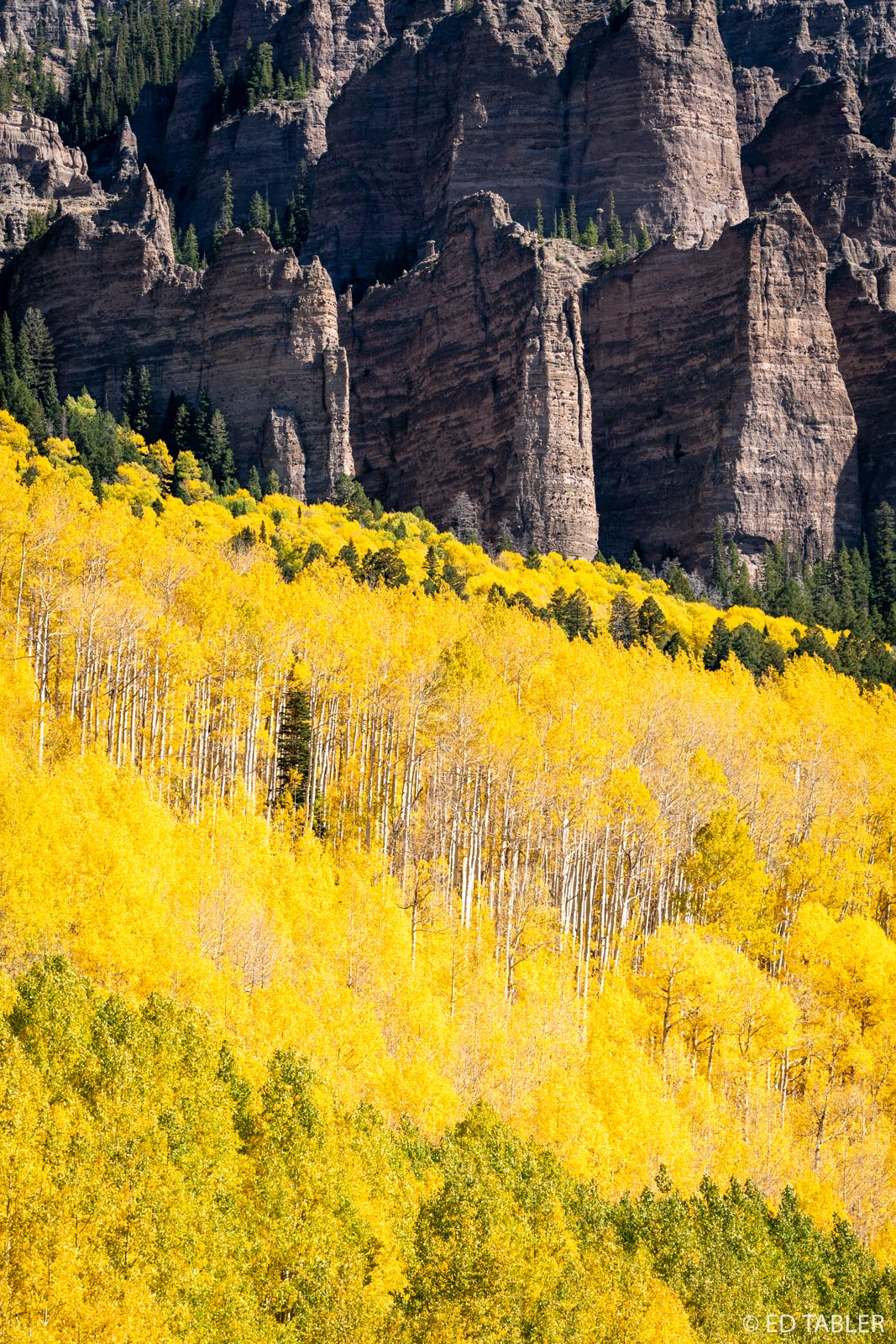 Near Owl Creek Pass, the green and yellow aspen, the lone pine tree, and the abrupt, dark pinnacles of High Mesa in the background...