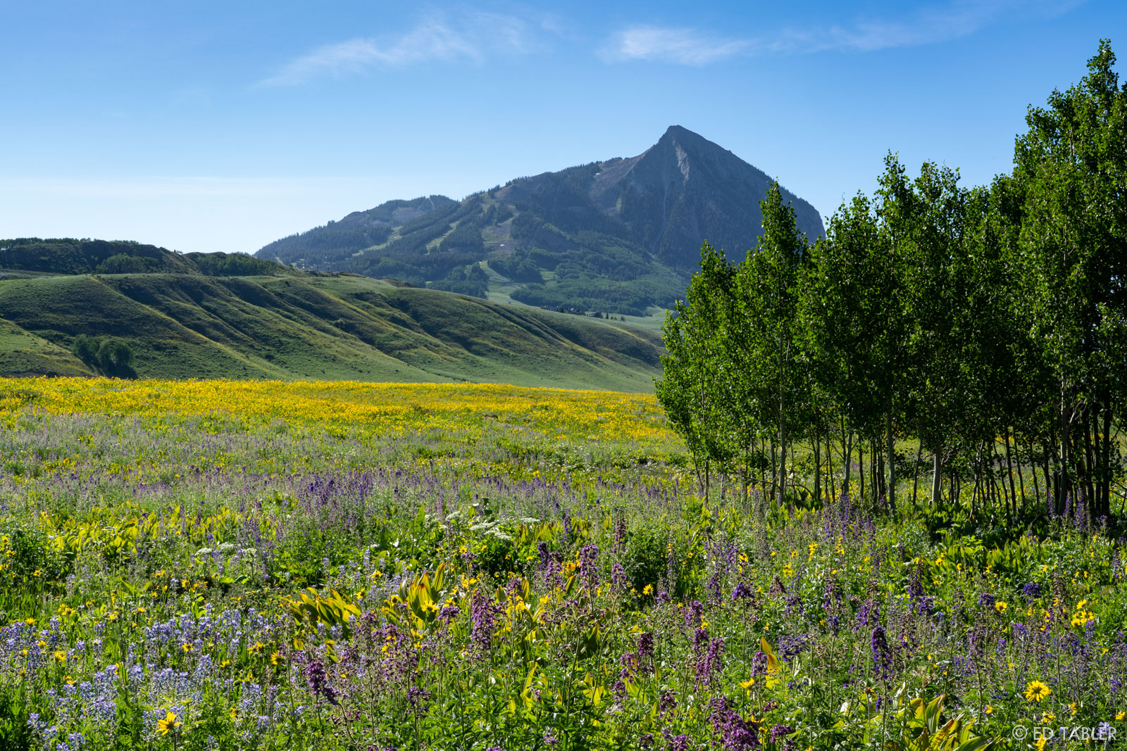 A sea of mule ear, larkspur and lupine, with Crested Butte in the background.